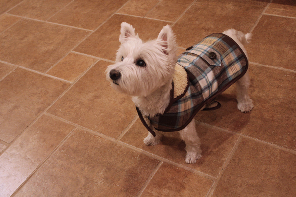 Calvin\'s New Coat (Country Gent Dog Jacket Tutorial) - blog - Olive ...
